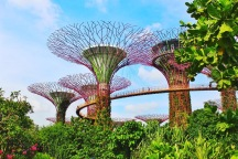 SuperTrees with OCBC Skyway - the walkway that allows you to walk amongst the Supertrees.